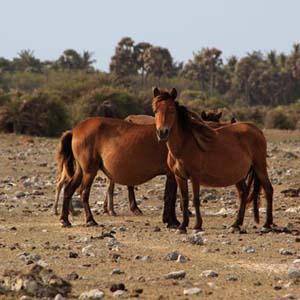 Delft Wild Horses