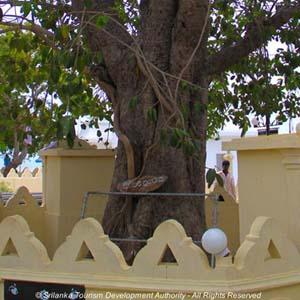 Nagadeepa Purana Raja Maha Viharaya