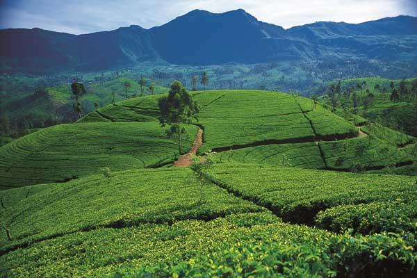 Tourism Promotions Bureau Starts Global TV advertising to boost tourism to Sri Lanka
