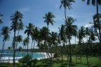 Shady coconut trees in beach Sri Lanka