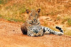 srilanka yala national park
